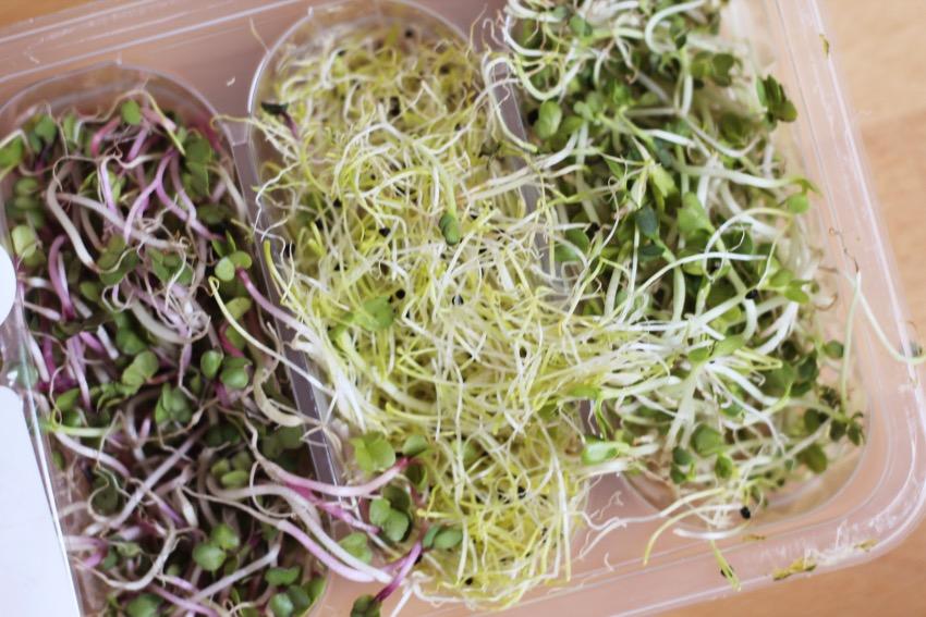 zelf-salade-buddha-bowl-maken-5