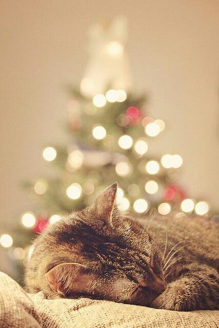 dankbaar-kerst