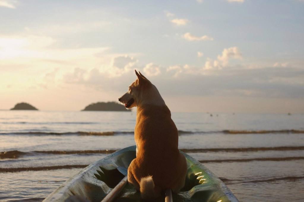 hond-strand-gelukkig